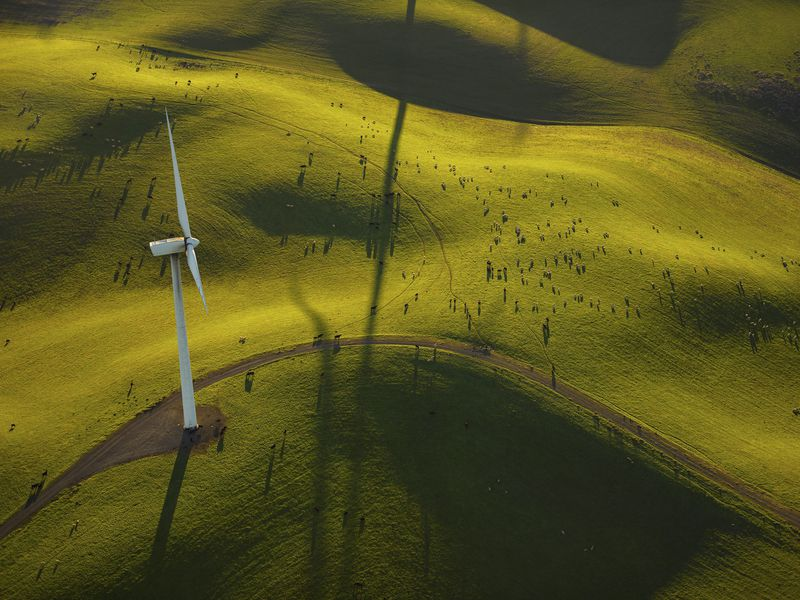 In September, 2018, Senate Bill 100 was signed into law - the legislation obliges California to meet 50 percent of its energy needs with clean power by 2025 and 60 percent by 2030 before ramping up to 100 percent by 2045. Numerous cows and sheep can be seen throughout the image. Aerial image (photographed from a plane).