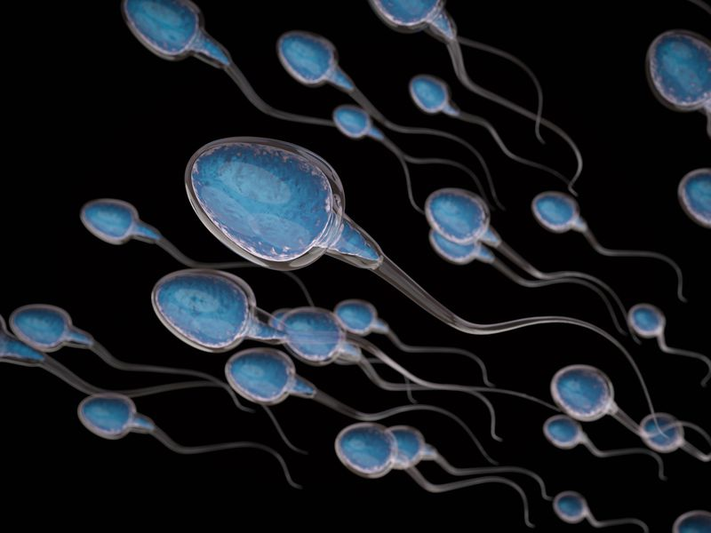 Image result for sperm