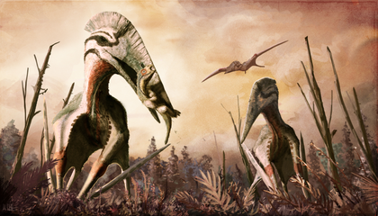 What Doomed the Pterosaurs?