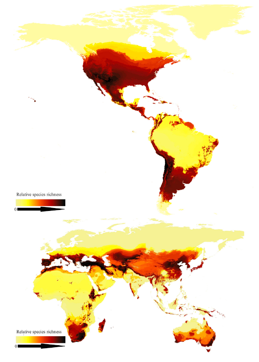 A map of global bee species richness with darker red zones indicating more diversity, and yellow zones indicating less diversity