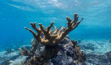 To Help Corals Fight Back, Scientists Are Breeding Populations Separated by Hundreds of Miles