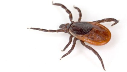A New Disease, a New Reason to Hate And Fear Ticks