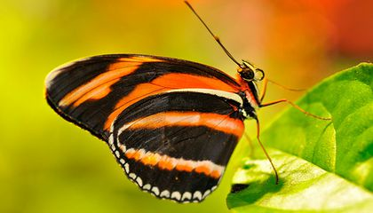 The List- Five Must-See Butterfly Spots Around the Mall