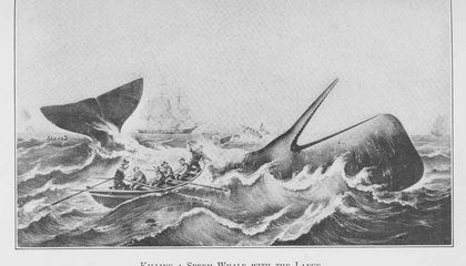 The Real-Life Whale That Gave Moby Dick His Name