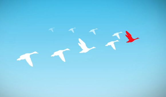 Preview thumbnail for video'TweenTribune: Why Do Geese Fly in a V?