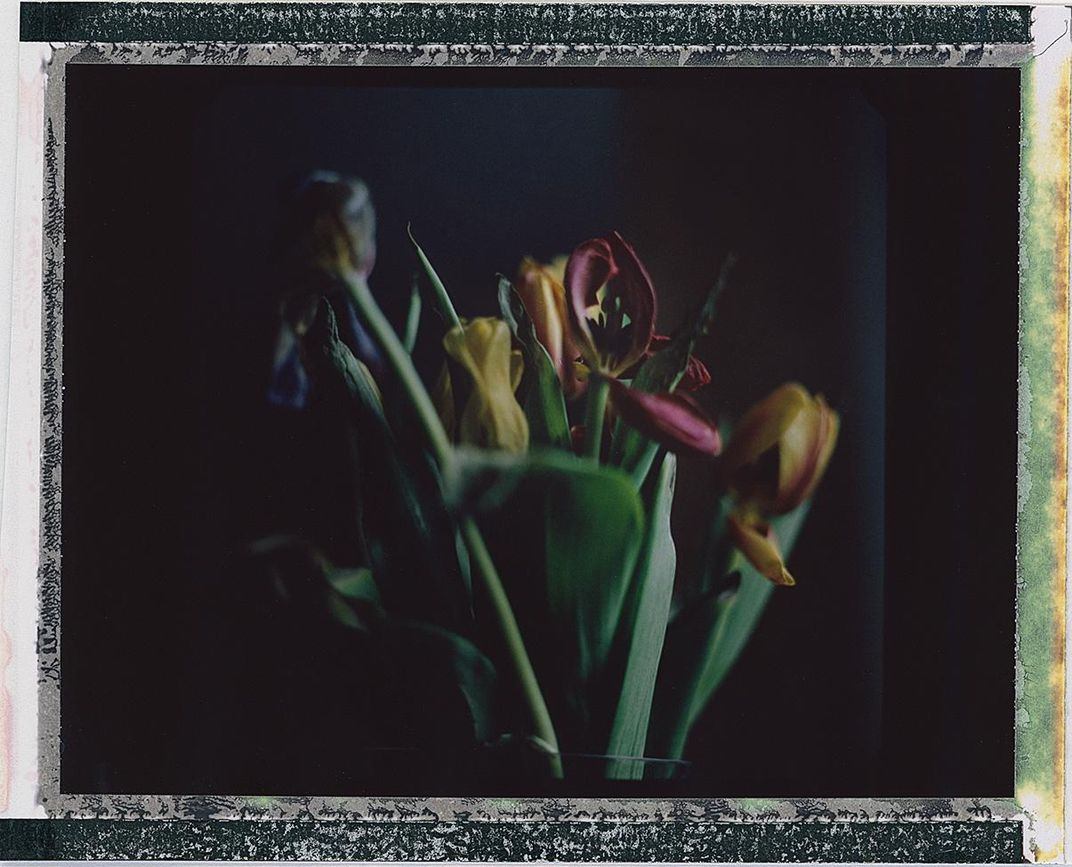 Our bouquet of tulips in the bedroom died in the first week of lockdown. I left them for a while by our bedside and then eventually moved them to the porch. I didn't throw them out for several weeks and photographed them again outside when the color of th
