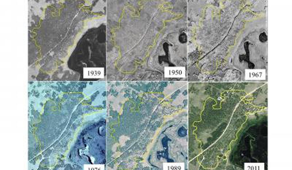 A seventy-two year aerial photo chronosequence showing forest cover change within the Pando aspen clone, Utah, USA.