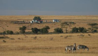 Major Loss of Wildlife in Kenya's Masai Mara