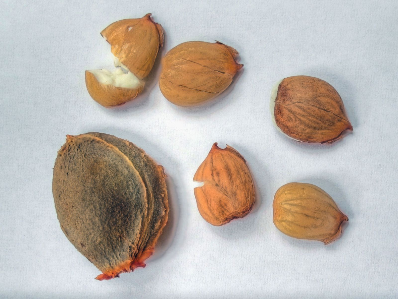 Man Poisons Himself by Taking Apricot Kernels to Treat