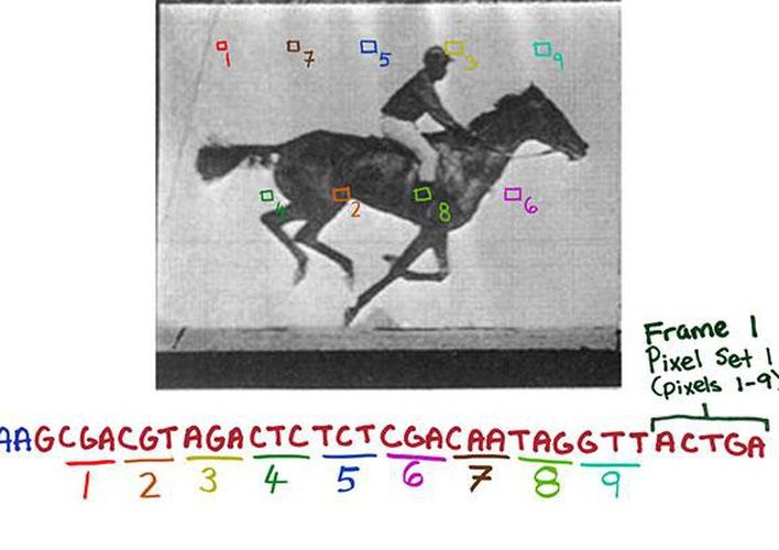 Caption: Scientists Store Video Clip in DNA of Living Cells