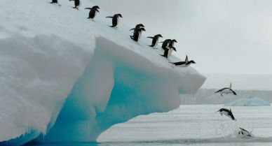 Adelie-Penguins-Photo-of-the-Day-388.jpg