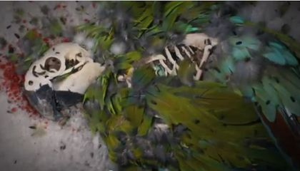 Watch These Beetles Tear the Feathers off a Parrot