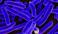 Scientists Create E. Coli Bacteria With Completely Synthetic Genome