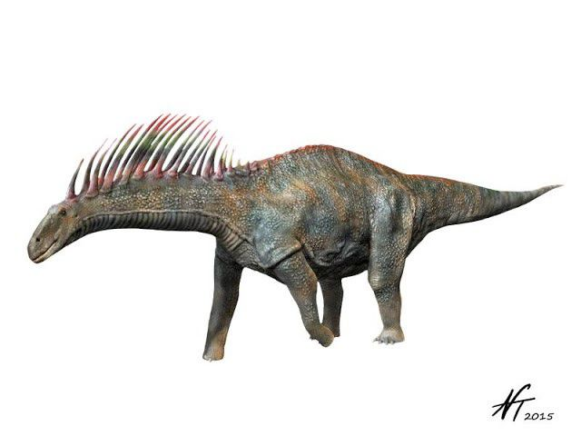 Left-facing, gray Amargasaurus on a white background.