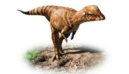 You Totally Would Have Wanted This Little Dome-Headed Dinosaur as a Pet