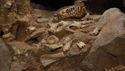 Once Plundered by Thieves, Ancient Cave Reopens with 3-D Replicas of Stolen Fossils