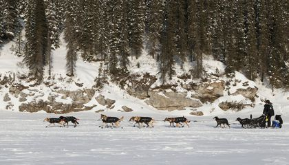 Alaska Is Shipping in Snow for This Year's Iditarod