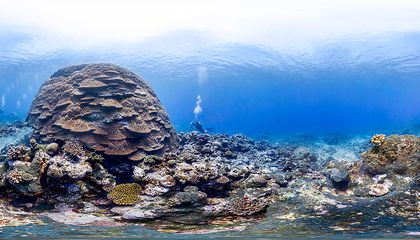 Take a Virtual Swim Through Five Marine Sanctuaries