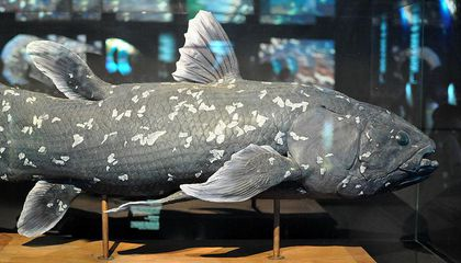 Madagascar May Be Stronghold for Ancient Fish With 420-Million-Year History