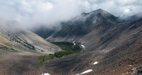 Trees grow at high elevations in the Rockies, fed by melting snow.
