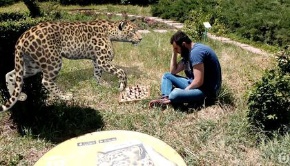 How Augmented Reality Is Helping Raise Awareness About One of Armenia's Most Endangered Species