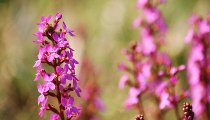 How Flowers Marvelously Evolved Resilience