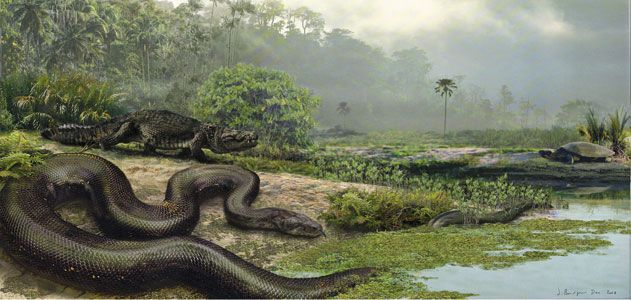 How Titanoboa, the 40-Foot-Long Snake, Was Found | Science | Smithsonian