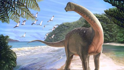 African Titanosaur Discovery Helps Untangle Dinosaur Evolution