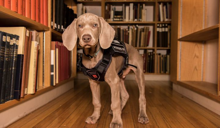 Boston Museum Trains Bug-Sniffing Puppy