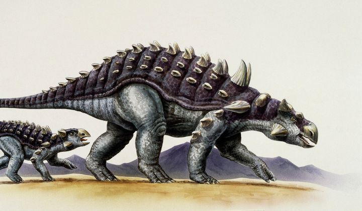 Armored Dinosaurs Kept Cool With Large Nose Canals
