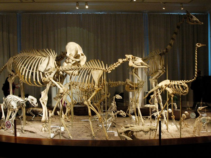 the hidden biases that shape natural history museums science