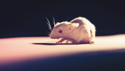 The First Patented Animal Is Still Leading the Way on Cancer Research