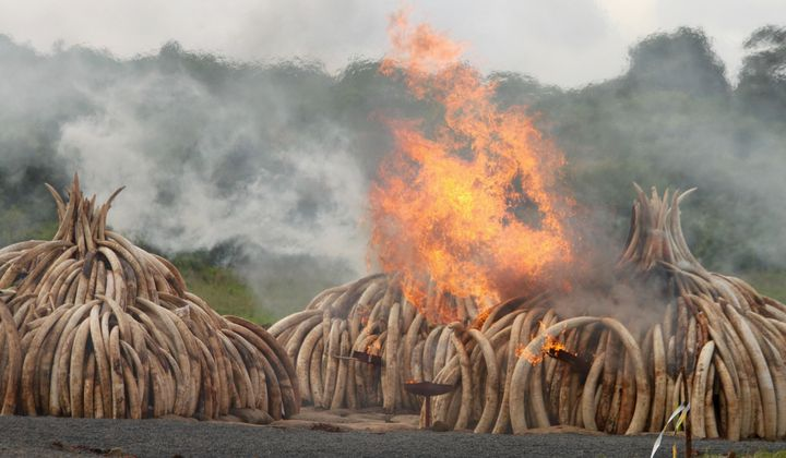 How the Illegal Wildlife Trade Is Growing Bolder