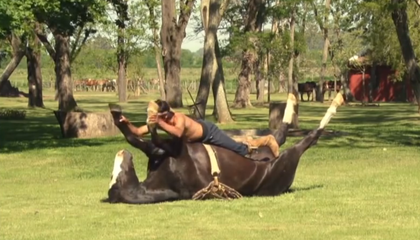 Horses Can Do Yoga