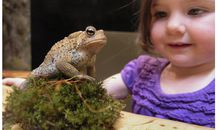 Hudson Highlands Nature Museum: Wildlife Education Center
