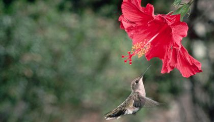 Putting Hummingbirds to the Test