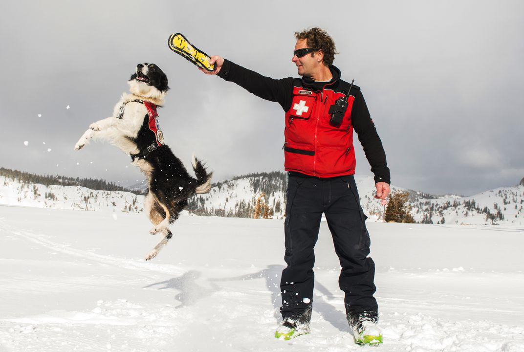 Ski dogs provide safety on slopes