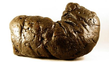Researchers Use Particle Accelerator to Peek Inside Fossilized Poop