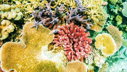 Why Are Scientists Studying Coral's Smell?