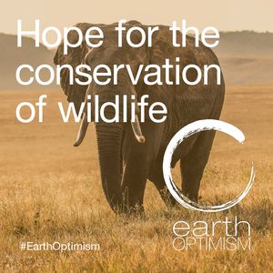 Hope for the conservation of wildlife