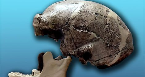 A replica of one of the Peking Man skulls
