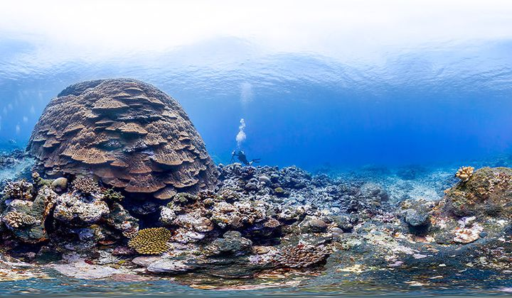 Take a Virtual Swim Through Five Marine Habitats