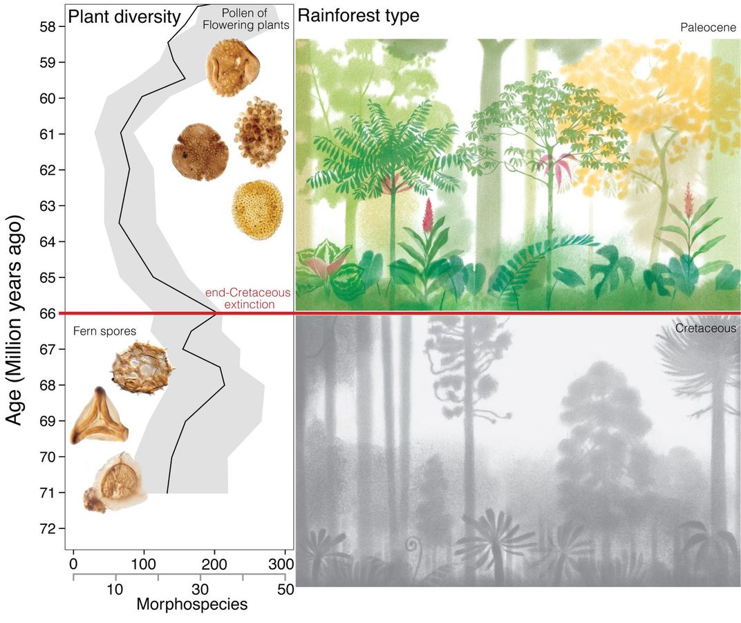 South American plant diversity before and after K/Pg boundary