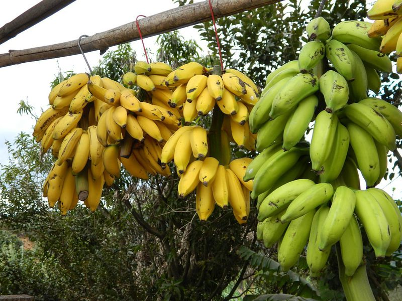 bunch-of-bananas-101594_960_720.jpg