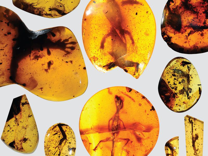 Collection of Lizards in Amber
