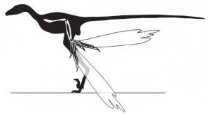 20110520083211Microraptor-shadow-wing-300x165.jpg