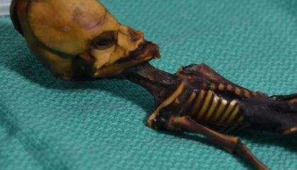 Researchers Solve the Mystery of the Atacama 'Alien' Mummy