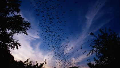 The Best Places Around the World to See Bats (by the Millions)