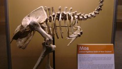 What Color Was That Moa?