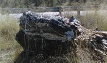 Wizard Rock, a One-Ton Boulder, Disappears From Arizona's Prescott National Forest
